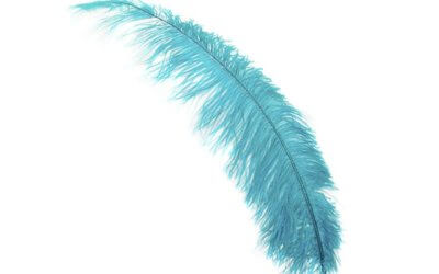 We need your feathers!
