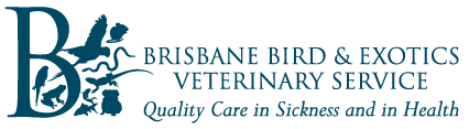 Brisbane Bird & Exotics Veterinary Service