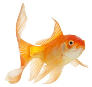 Fish care at Brisbane Bird and Exotic Veterinary Service