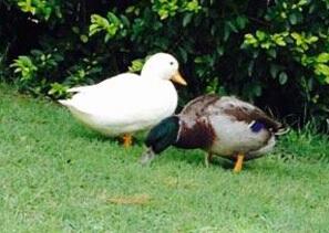 Birds - Brisbane Bird & Exotics Veterinary Service