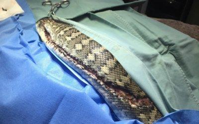 Sylvia the Sliced Snake